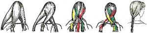 Рисунок плетения классической косички