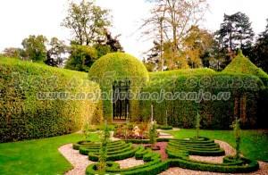 Советы фэн-шуй для садоводов и огородников