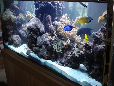Маленький аквариум: «за» и «против»